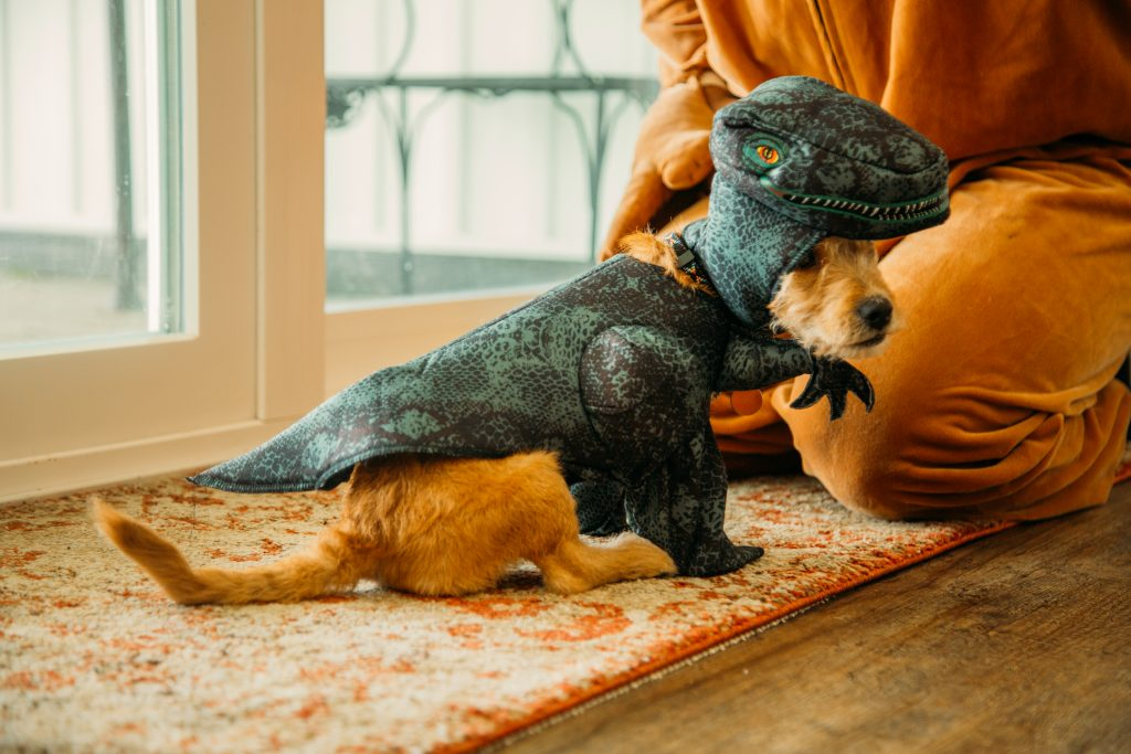 Buddy the puppy in his velociraptor Halloween costume for small dogs