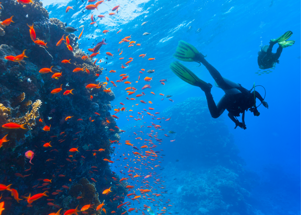 Scuba diving in Turks and Caicos is one of the best things to do