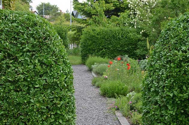 rum i haven