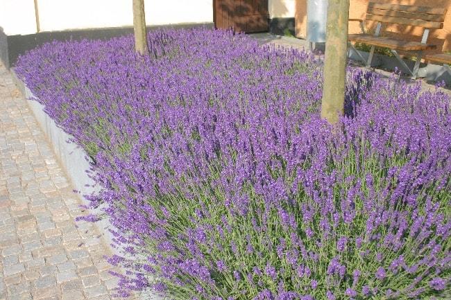 Havedesign til den tørketålende have