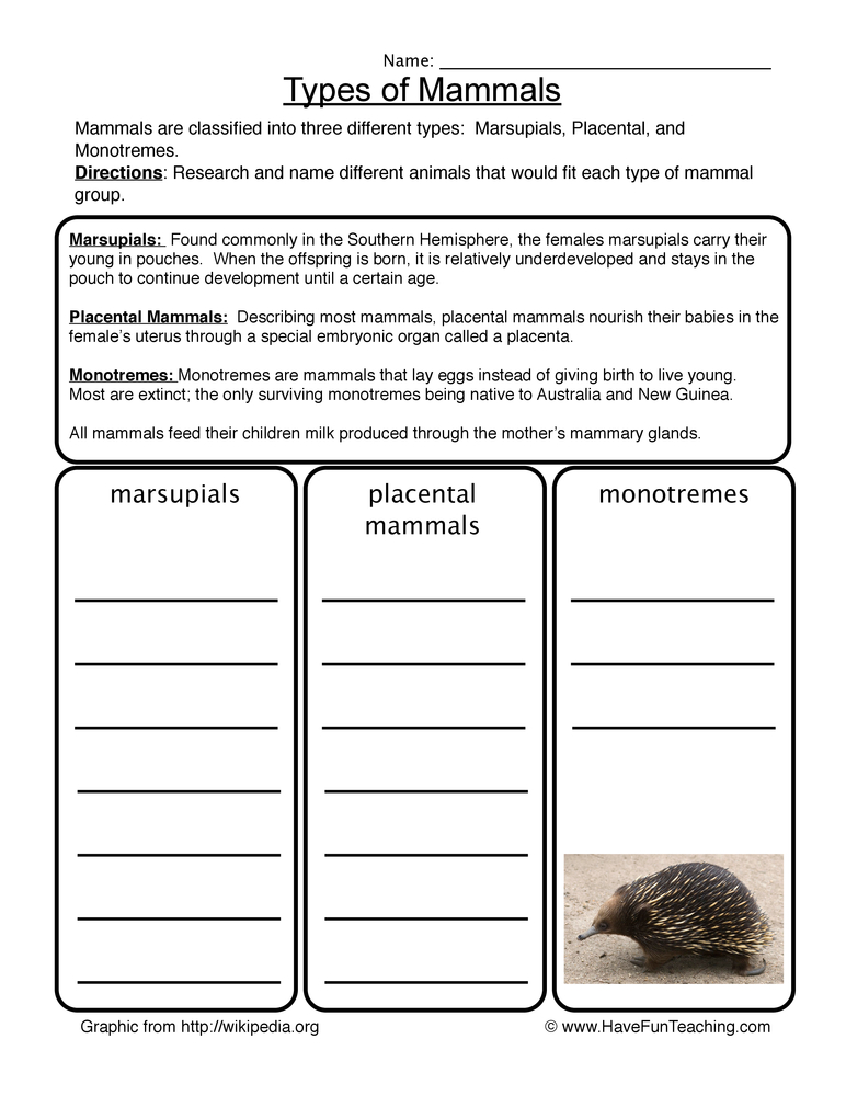 Classification Worksheets