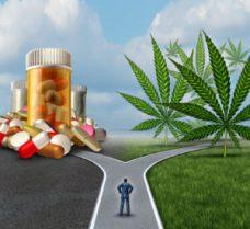 Marijuana Medical Choice