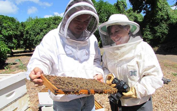 2 people examining honeybee hive