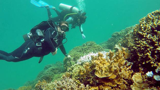 Manoa Himb Coral Gates F