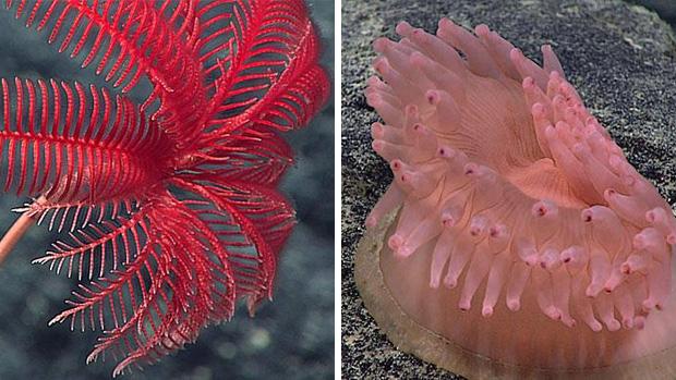 crinoid and anemone