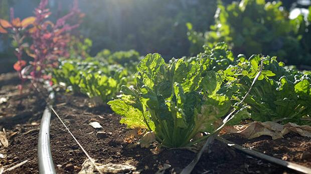 system-garden-crop