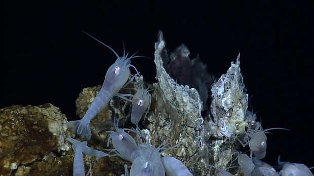 Biodiversity Loss From Deep-sea Mining Will Be Unavoidable