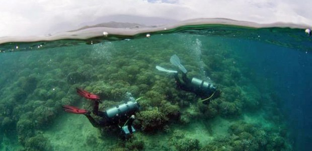 two scuba divers examining coral reef