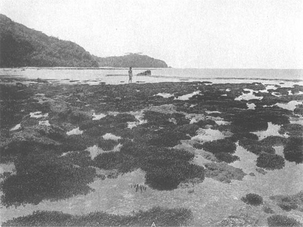 Historical black and white image of coral reefs