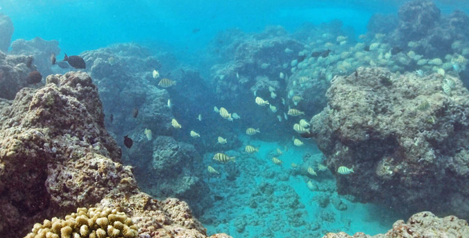 Hawaiʻi nearshore fishery provides big benefits