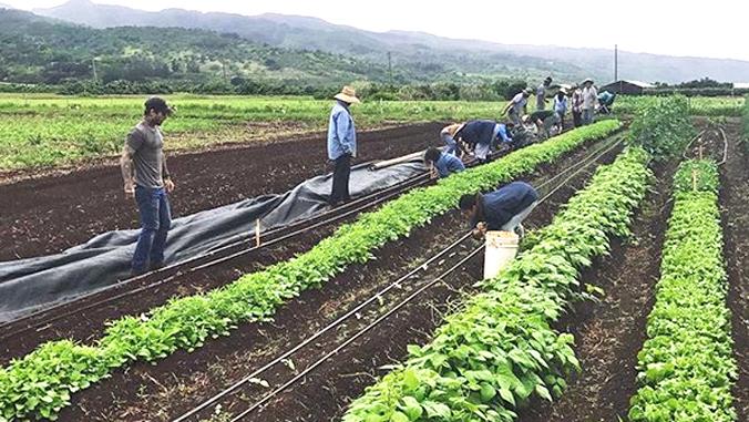 GoFarm Hawai'i Receives Funding To Continue Training Future Farmers