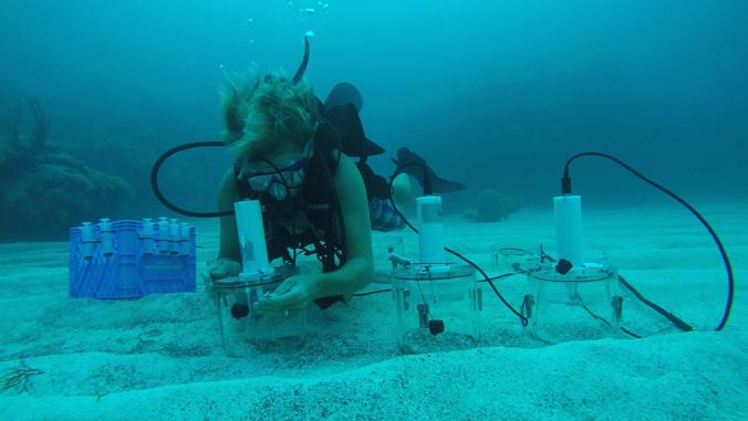 Acidic Oceans Pose Global Coral Reef Threat