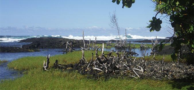 Coastal scene with debris
