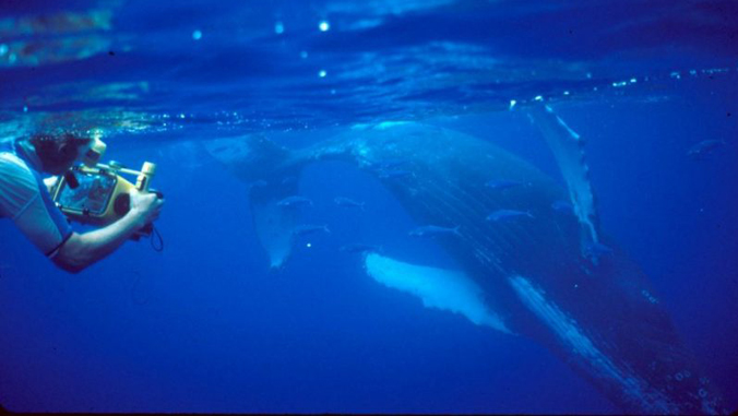Pack swimming next to humpback whale