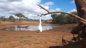 white sock on a branch by a watering hole