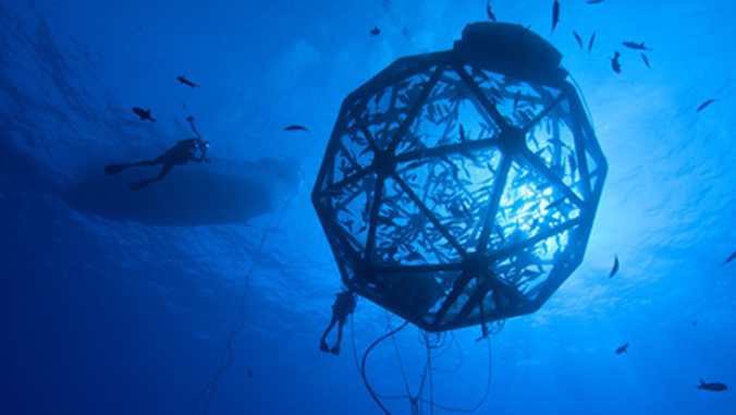 Kampachi fish in a cage ball in the ocean