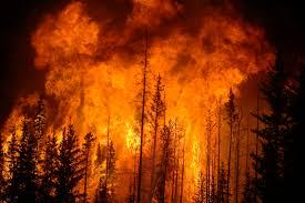 photo of trees on fire