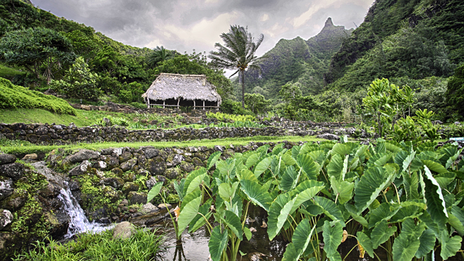 Journal publishes largest collection of scientific publications by Native Hawaiians