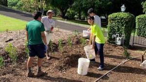 people planting mock orange