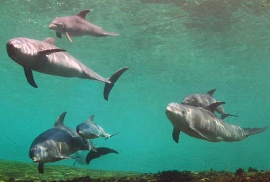 Pele and Malu are at the top. Keo and Lehua are on the lower left. Kona and Nahele are on the right. (Photo courtesy of Dolphin Quest)