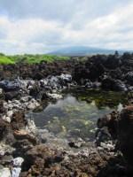 Anchialine Ponds. NPS Photo