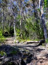 Kaulana Manu Nature Trail