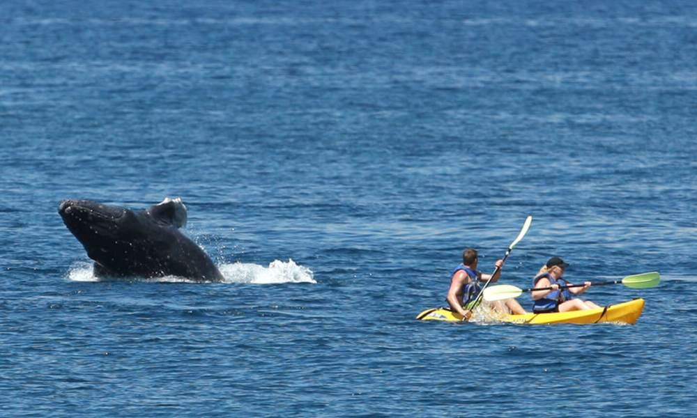 Maui Kayak Adventures & Tours | Kayak Tours in Wailea | Maui