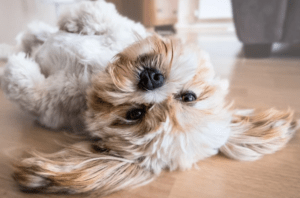 Tips to Create a Home More Dog-Friendly