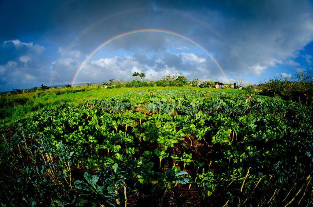 organic farms hawaii, sustainable farming hawaii