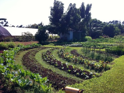 Kauai Organic Farms - Garden beds in a semi-circle
