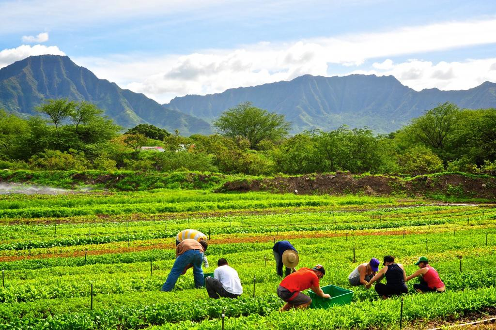 organic farms oahu, hawaii organic farms, organic farms hawaii