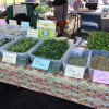 Microgreens & Sprouts in Hawaii