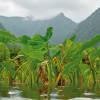 Kohala Seed Initiative seed tool