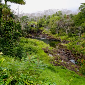 Waterfall and stream in semi-tropical forest