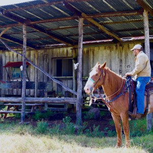 Horse and rider in front of old cabin