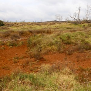 Dry pasture with red dirt