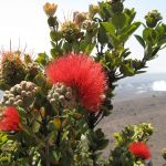6 Iconic Tropical Flowers That Will Make You Think Of Hawaii Hawaii Magazine