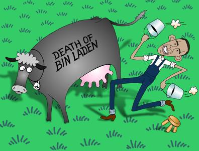 Omaba cartoon, Obama milks the getting of Osama Bin Laden, Obama milking Bin Laden story