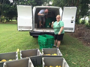 hawaii-food-bank-picks-up-a-recent-starfruit-donation