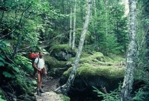 Hiking through coastal rain forest