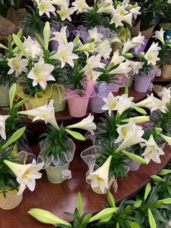 Tropical Gardening: Celebrate Easter with a gift of life