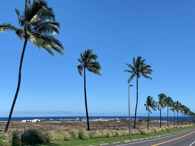 Tropical Gardening: What would Hawaii be without coconut palms?