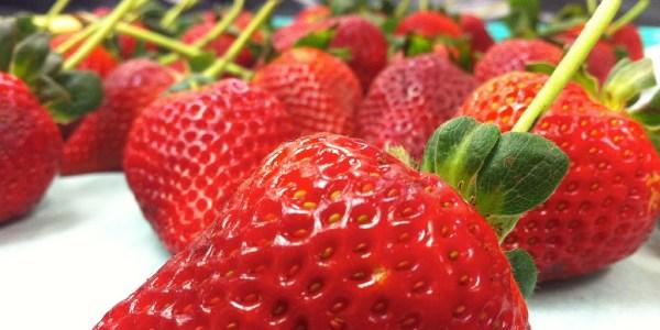 padovani-chocolate-strawberries-1