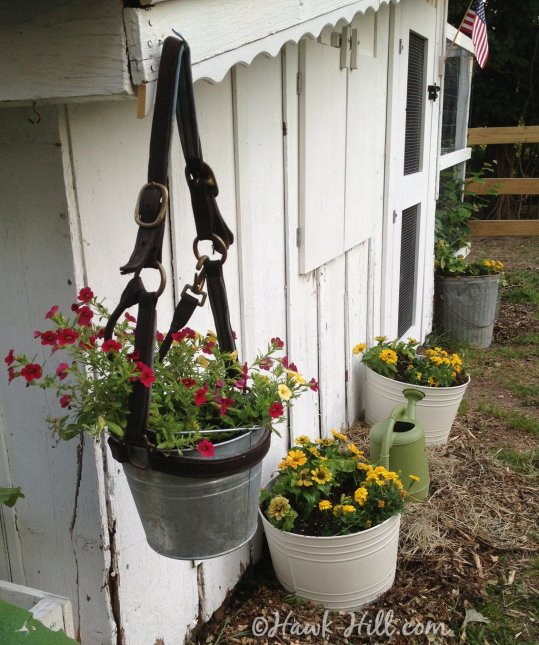 Old Horse Halter & Galvanized Bucket used as Hanging Planter - Hawk-Hill.com