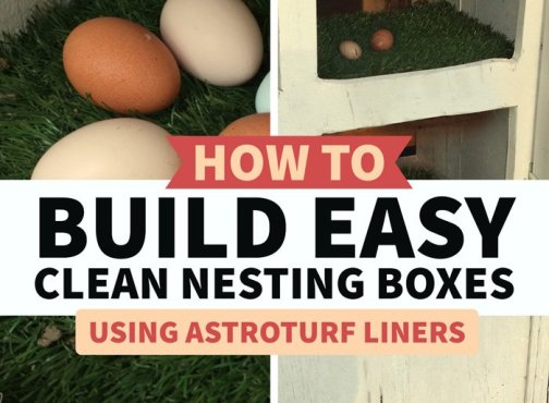 lining nesting boxes with this reusable material makes cleanup a breeze
