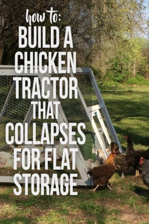 Build a portable chicken tractor that can be collapsed down and folded flat for winter storage.