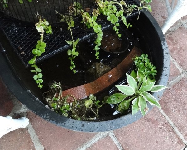 hostas, impatiens, creeping jenny, and watercress in porch water features
