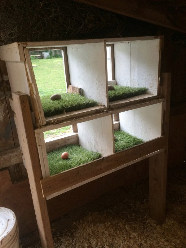 Lining Chicken Nesting Boxes with Astro-Turf for Easy Cleaning- Hawk-Hill.com
