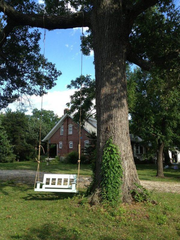 Porch swin hanging from a oak tree in front yard
