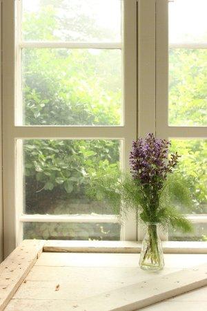 Sage Blossoms cut in vase